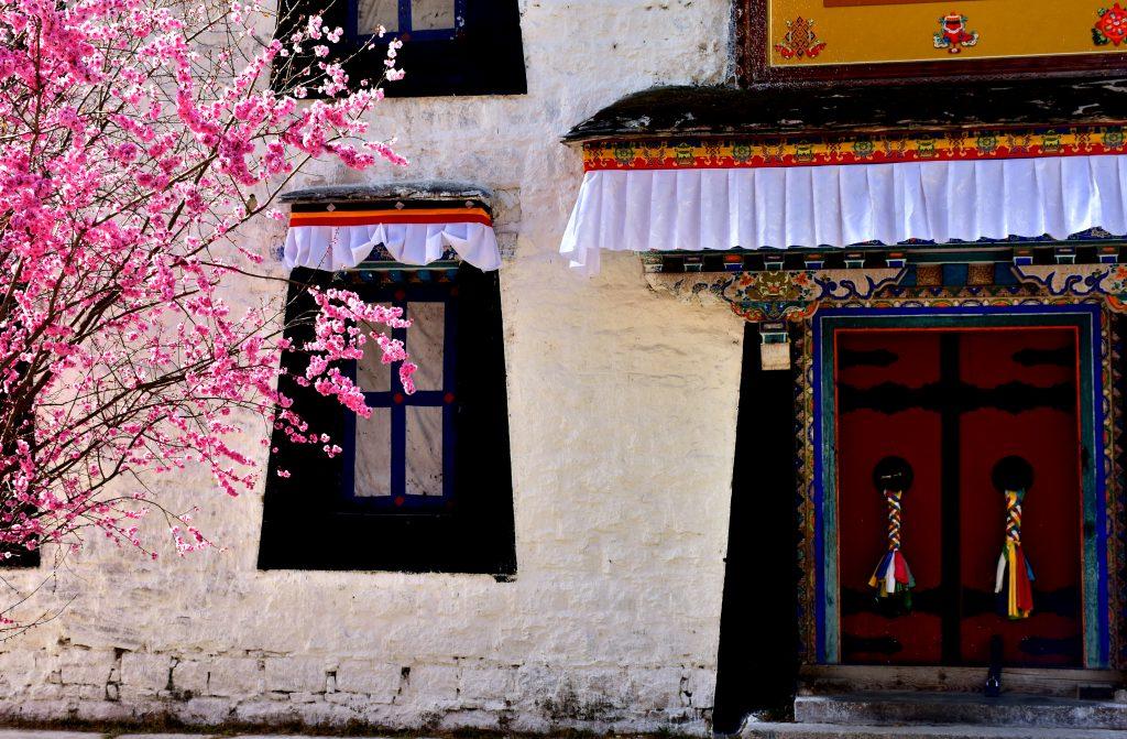 Spring tree blossom in Norbulingka park in Lhasa